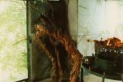 درخت کهنسال مورد در نیایشگاه پیر نارستانه
